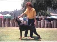 Black and Rust Doberman,Southern Ca.